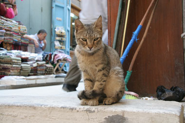 ハーン・ハリーリの猫2