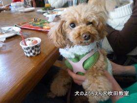 201191215sui (29).JPG