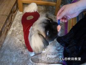 201191215sui (33).JPG