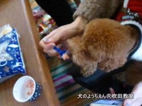 201191215sui (34).JPG