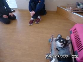 20118すい (19).JPG
