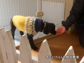 20118すい (23).JPG
