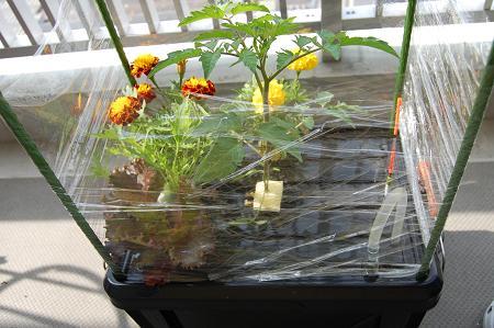 自作の水耕栽培セット