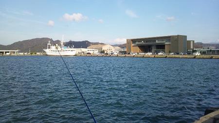 小浜港釣り