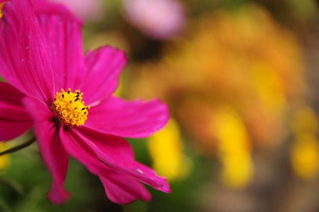 お花。こーゆーピンクって好き。