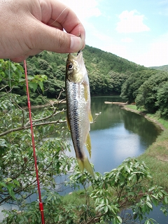 カワムツ 釣り