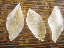 葉っぱの石鹸