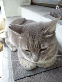 沖縄の猫は芸達者!?