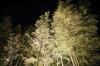 倉敷の竹林01