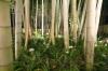 倉敷の竹林02