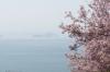 桜(サンパレア03)
