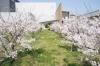 桜(サンパレア04)