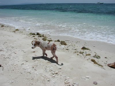 海岸沿いの子犬