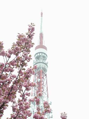 東京タワー2006.4.19