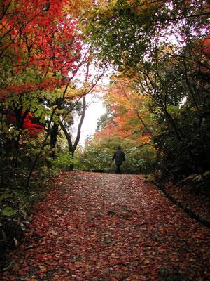 新潟中野邸紅葉