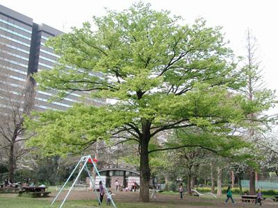 2008.4.4日比谷公園