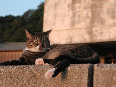2008.9.14佐渡猫