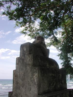 プラキ寺院前サル