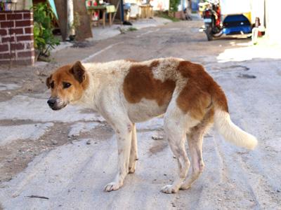 2009.5.51モアルボアル犬