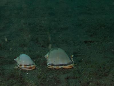 2009.8.18謎の貝ペア