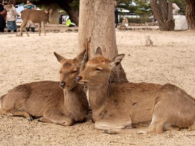 2009.1.2宮島・厳島神社・鹿