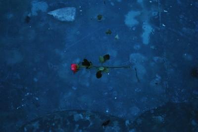冬の川に花