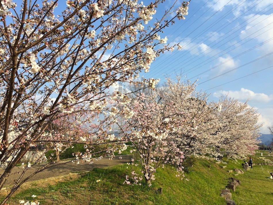 松尾川公園