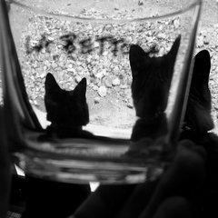 グラスの向こうに、猫が見える