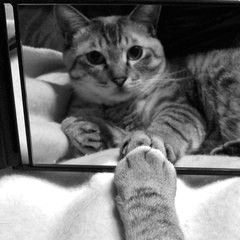 鏡越しにみつめるレオ君