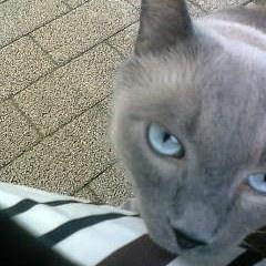 青い目って美味しいの?