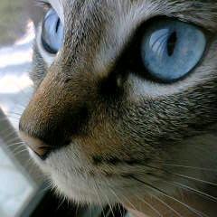 おっきな青い目