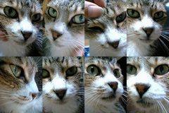 ハンサムビューティーな猫