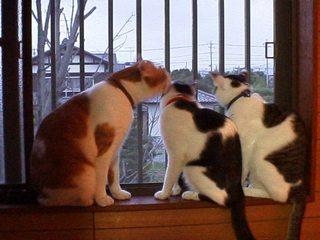 在りし日の猫たち