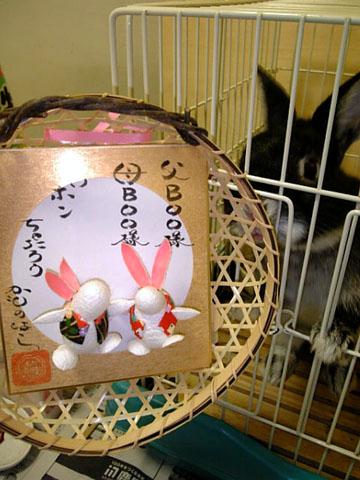 繭玉ウサギとイヤシイ系ウサギ