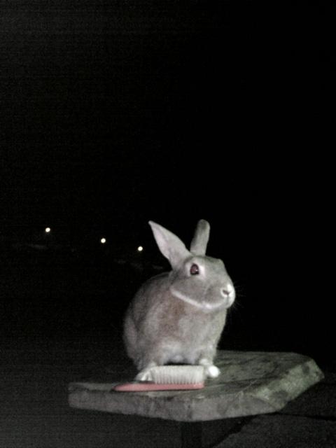 闇に浮かぶウサギ