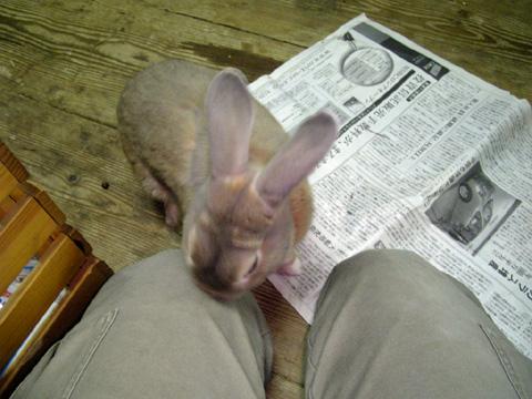 他のウサギの匂いがするぞ・・・?