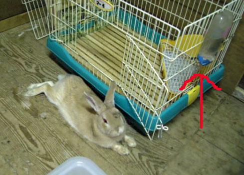 くつろぐ阿呆ウサギ