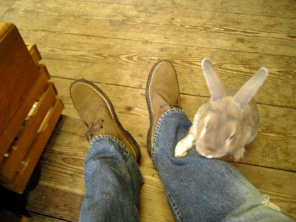 もう違う靴はないんか?