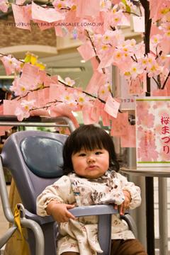 桜短冊ときのこ