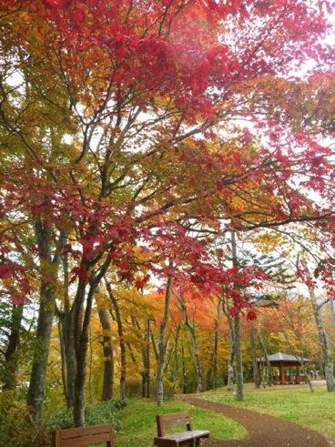 ブログ20121130紅葉.jpg