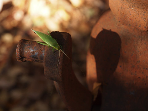 錆びた鉄ポンプのバッタ