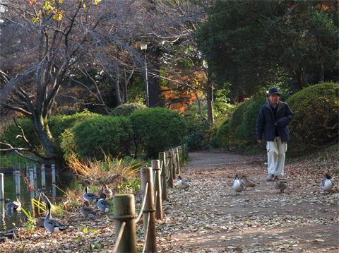 散歩する人と水鳥