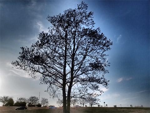 河原の大きな木