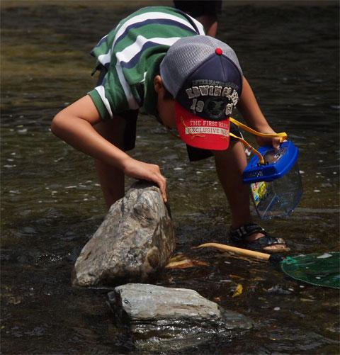石の下に川エビや小魚がいそう