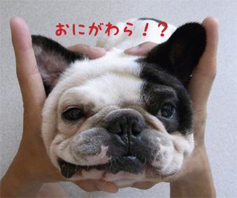 おにがわら!?