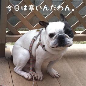 今日のおいら(2011.5.5)