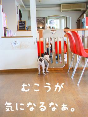 ドッグカフェで