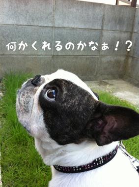 今日のおいら(2011.7.12)