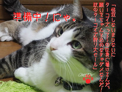akino_sale.jpg