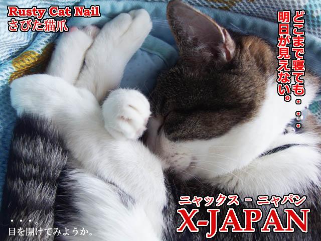 錆びた猫.jpg